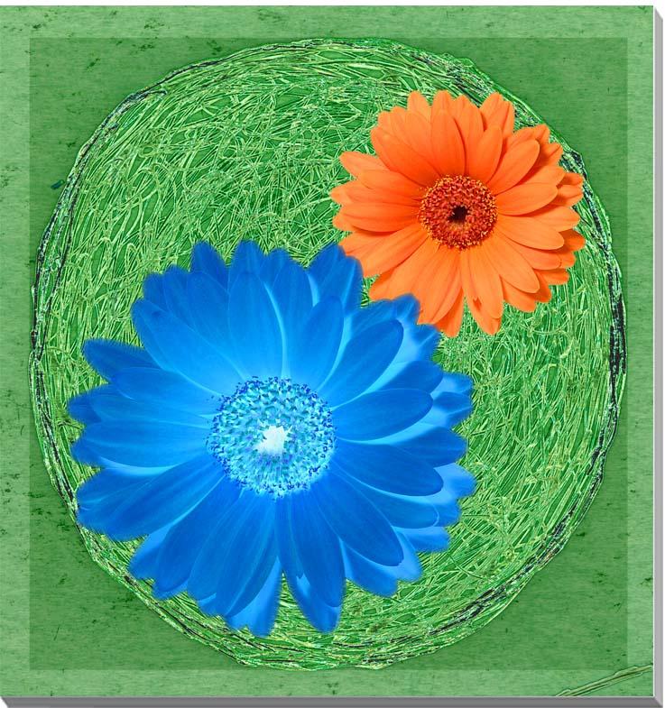 ガーベラ 花 CG写真パネル 65.2×65.2cm CG-030-S15 ギフト 贈り物 インテリアアート アートフォト CG 写真パネル