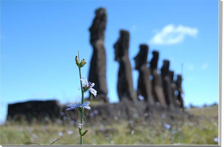 世界遺産イースター島 アフ・アキヴィの後ろ姿のモアイ 風景写真パネル 45.5×27.3cm M8 【楽ギフ_包装】 【楽ギフ_のし宛書】 【楽ギフ_名入れ】