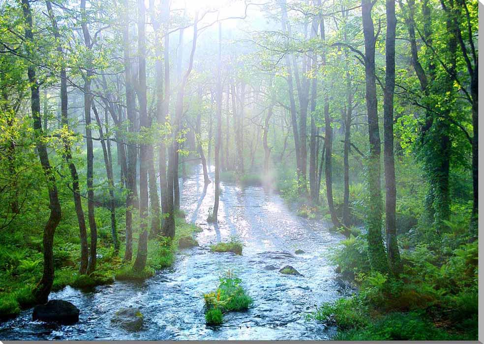 朝もやの長瀬川 福島裏磐梯 風景写真パネル 84.1×59.4cm FUK-122-A1 【楽ギフ_名入れ】