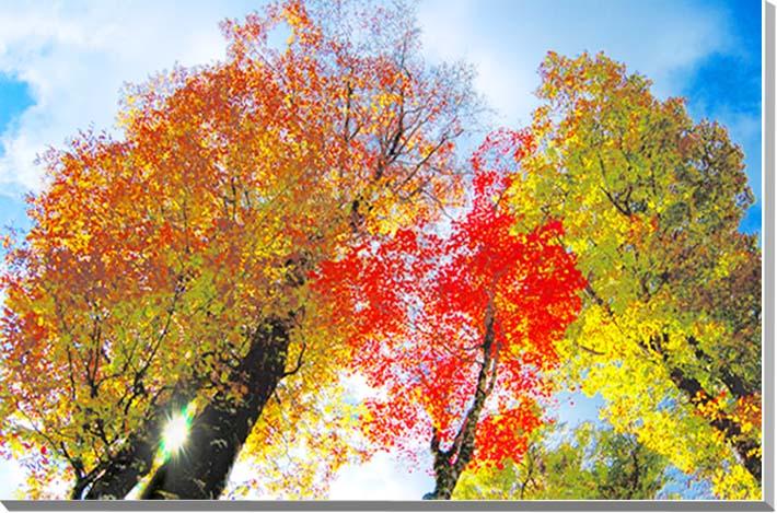駒止湿原 福島 風景写真パネル 53×41cmFUK-90-P10  【楽ギフ_名入れ】