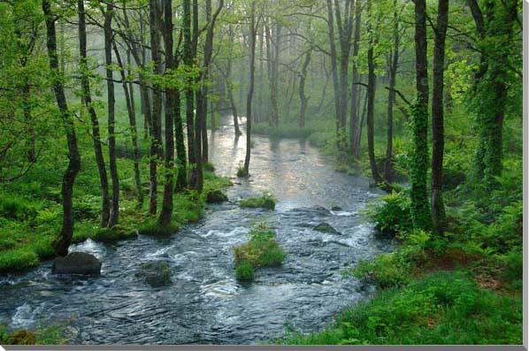 朝もやの長瀬川 福島裏磐梯 風景写真パネル 80.3×53cm FUK-97-M25