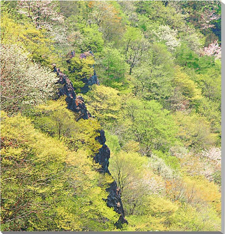福島/春の霊山 風景写真パネル 53×53cmFUK-054-S10 【楽ギフ_名入れ】