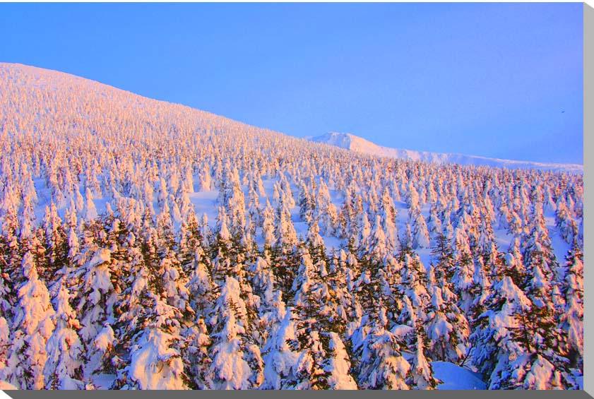 冬の蔵王 樹氷 風景写真パネル 80.3×53cm M25 【楽ギフ_名入れ】