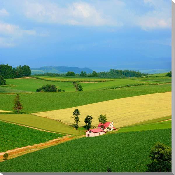 北海道 美瑛 赤い屋根の家 風景写真パネル 壁飾り/壁掛け/インテリア 72.7×72.7cm HOK-150-S20 【楽ギフ_名入れ】