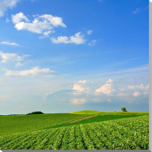 北海道 美瑛の風景 風景写真パネル ウォールデコ アートパネル グラフィック インテリア HOK-159-S10 【楽ギフ 包装】 【楽ギフ のし宛書】 【楽ギフ 名入れ】