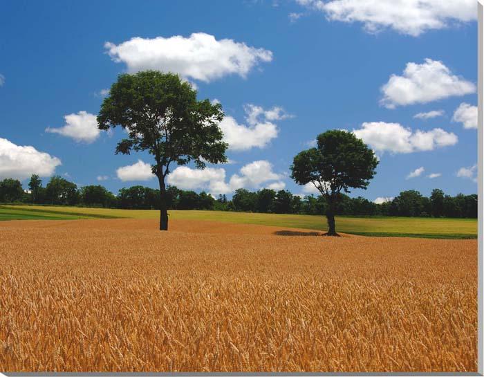北海道 富良野麓郷 メルヘンの木 風景写真パネル 65.2×53cm HOK-100-F15 【楽ギフ_名入れ】
