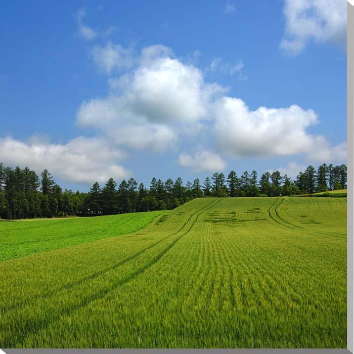 北海道 富良野麓郷 麦畑 風景写真パネル 60.6×60.6cm HOK-104-S12 【楽ギフ_名入れ】