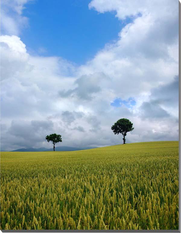 北海道 富良野麓郷 メルヘンの木 風景写真パネル 72.7×60.6cm HOK-95-F20 【楽ギフ_名入れ】