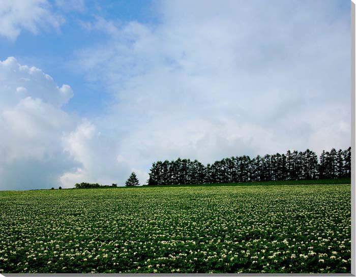 北海道美瑛 マイルドセブンの丘 風景写真パネル 80.3×65.2cm HOK-35-F25 【楽ギフ_名入れ】