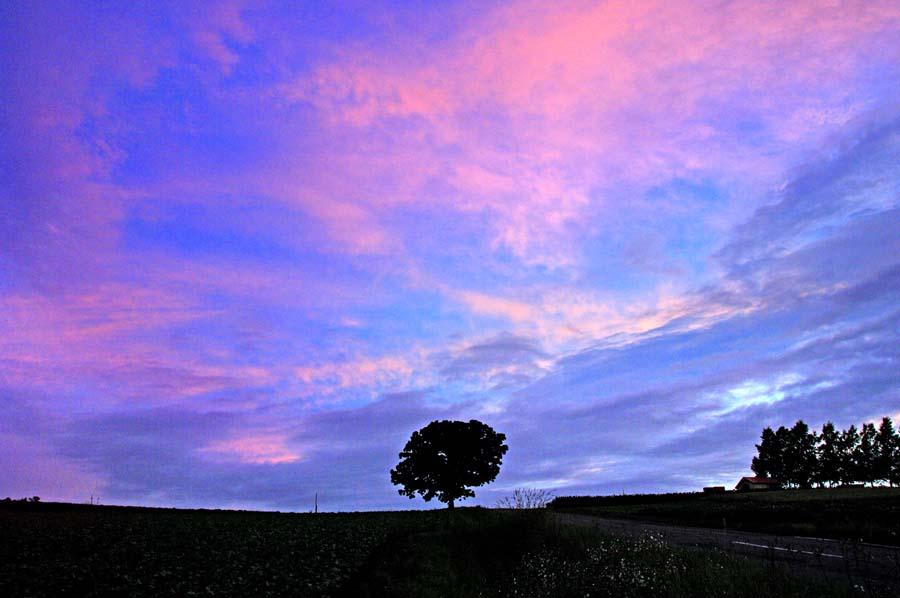 北海道美瑛 セブンスターの木 夕暮れ 風景写真パネル 72.8×51.5cm HOK-37-B2 【楽ギフ_名入れ】