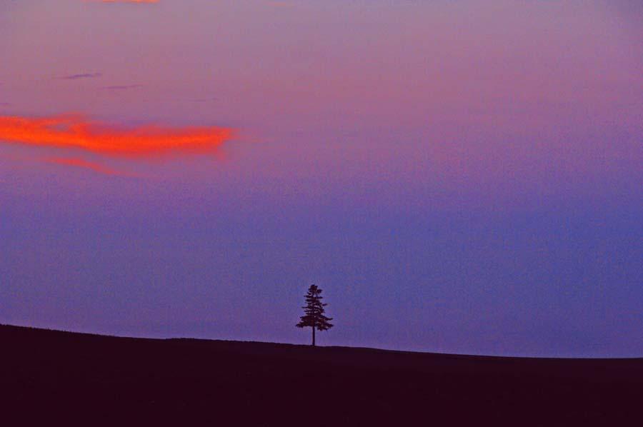 北海道美瑛 セブンスターの木の丘 日暮れ 風景写真パネル 72.8×51.5cm HOK-40-B2 【楽ギフ_名入れ】