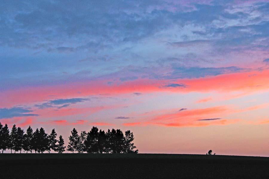 北海道美瑛 セブンスターの木の丘 夕暮れ 風景写真パネル 80.3×53cm HOK-41-M25 【楽ギフ_名入れ】