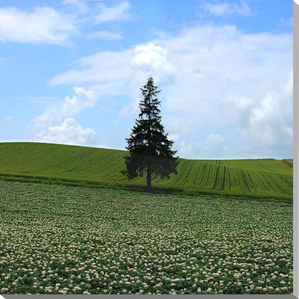 北海道美瑛 ジャガイモの花とクリスマスツリーの木 風景写真パネル 80.3×80.3cm HOK-45-S25 【楽ギフ_名入れ】