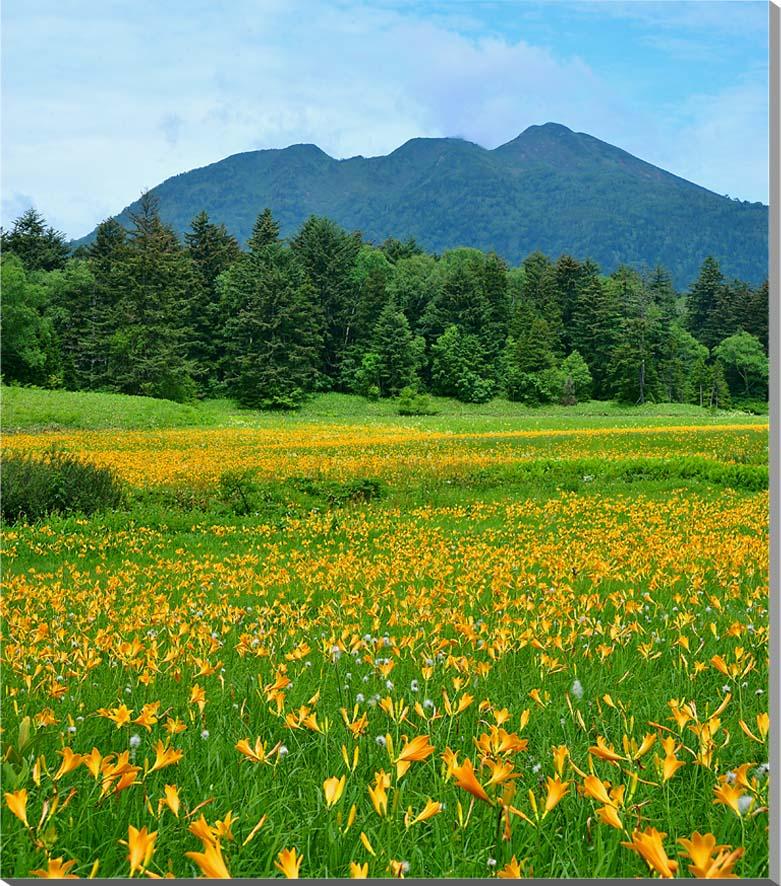 尾瀬沼 ニッコウキスゲ 風景写真パネル 80.3×65.2cm OZE-004-F25【楽ギフ_名入れ】