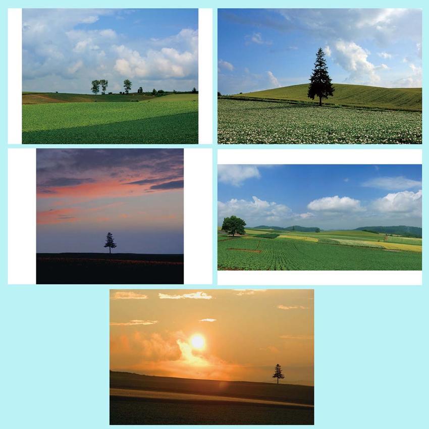 大空と広大な風景 ポストカード 送料無料 ご予約品 風景写真 絵ハガキ 夏 暑中見舞い お得な5枚セット PST-set-22 美瑛の木 引っ越し挨拶 年賀状 北海道 正規激安 礼状