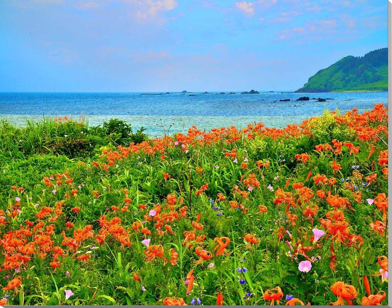 風景写真 パネル 山形 飛島 海とオニユリの花 65×51cm yam-050 インテリア ポスターとは違う,リビング,玄関にそのまま飾れる額がいらない,壁掛け,壁飾り。絵画 アート,アートパネル,癒やしの装飾をお祝い,プレゼント,ギフトにも。