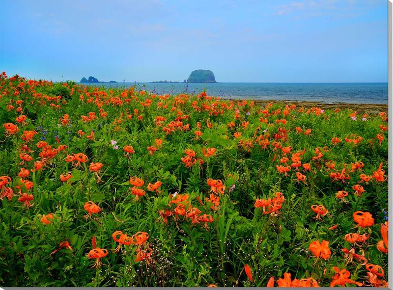 風景写真パネル 山形 飛島 海とオニユリの花 91×65.2cm yam-054-p30 インテリア ポスターとは違う,リビング,玄関にそのまま飾れる額がいらない,壁掛け,壁飾り。絵画 アート,アートパネル,癒やしの装飾をお祝い,プレゼント,ギフトにも。