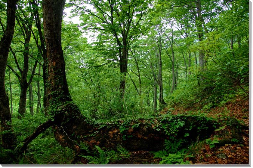 山形朝日村 風景写真パネル 65.2×45.5cmYAM-30-M15  【楽ギフ_名入れ】