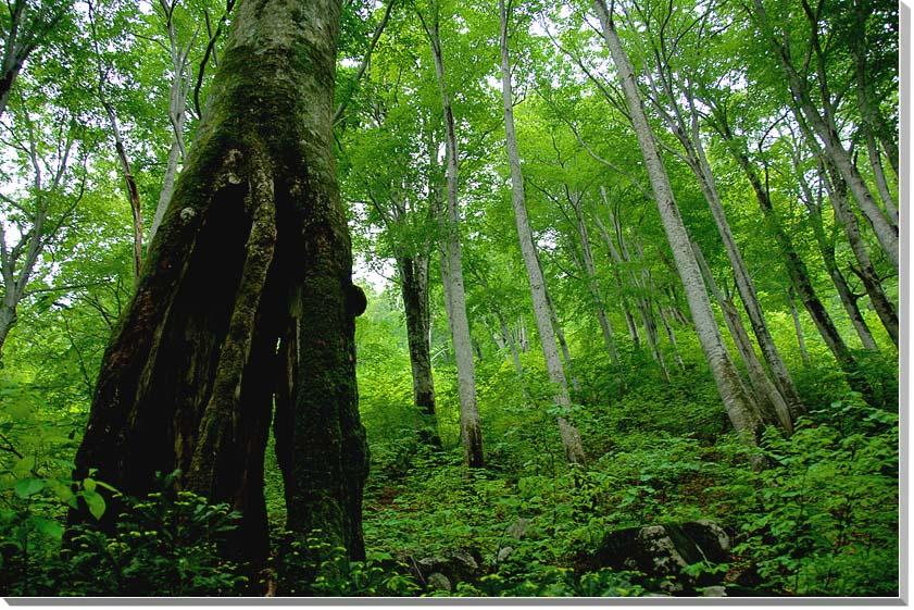 山形朝日村 風景写真パネル 72.7×50cmYAM-41-M20  【楽ギフ_名入れ】