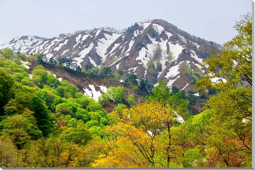 山形朝日村 風景写真パネル 80.3×53cmYAM-44-M25  【楽ギフ_名入れ】