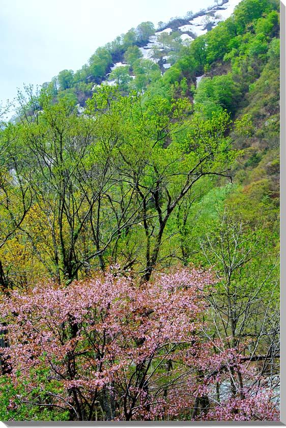 山形朝日村 風景写真パネル 91×60.6cmYAM-47-M30  【楽ギフ_名入れ】