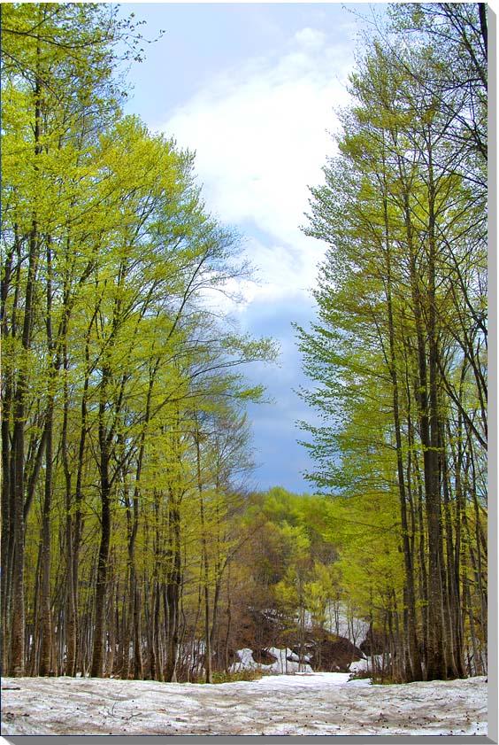 山形朝日村 風景写真パネル 65.2×45.5cmYAM-37-M15  【楽ギフ_名入れ】