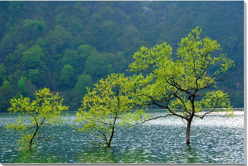 山形朝日村 新緑のダム湖 風景写真パネル 65.2×45.5cm YAM-26-M15