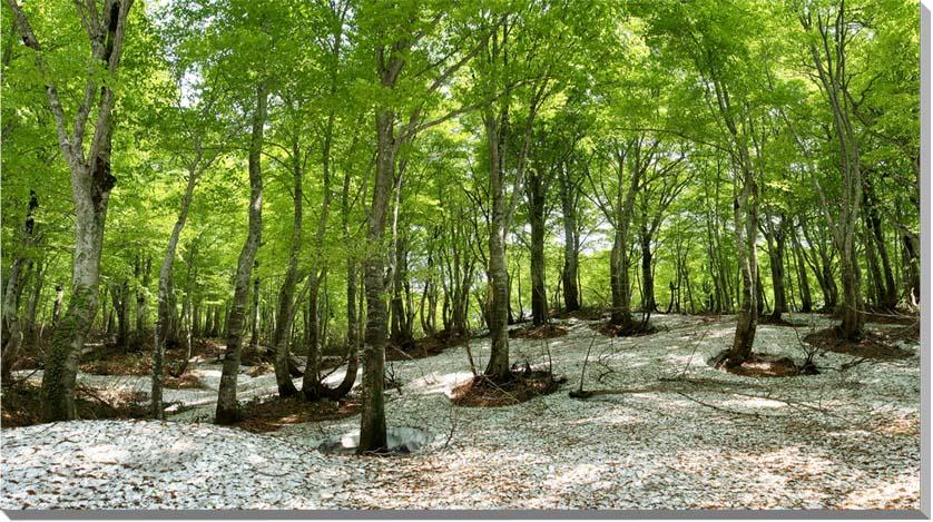 山形月山 風景写真パネル 120×70cmYAM-12-12070  【楽ギフ_名入れ】