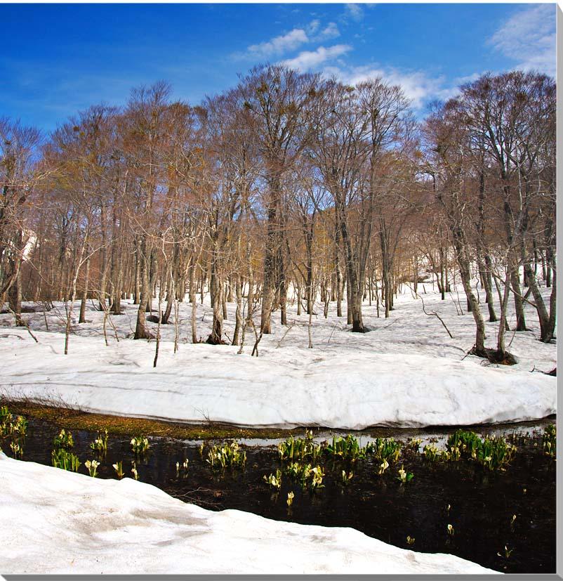 山形月山 風景写真パネル 72.7×72.7cmS20  【楽ギフ_名入れ】