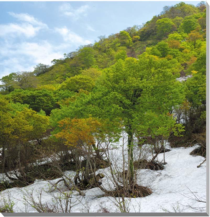 山形月山 風景写真パネル 65.2×65.2cmYAM-19-S15  【楽ギフ_名入れ】