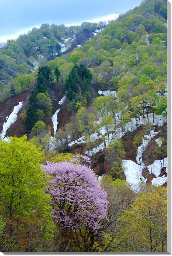 山形 風景写真パネル 91×60.6cmM30  【楽ギフ_名入れ】