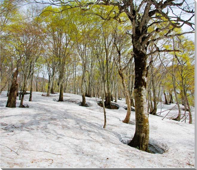 山形月山 風景写真パネル 65.2×53cmYAM-23-F15  【楽ギフ_名入れ】