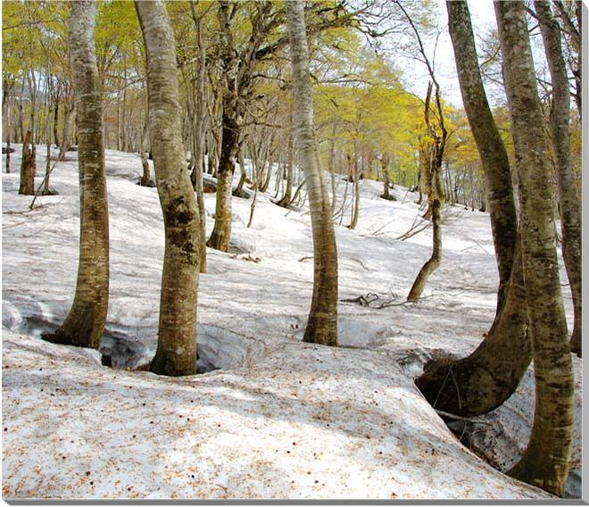 山形月山 風景写真パネル 60.6×50cmYAM-24-F12  【楽ギフ_名入れ】