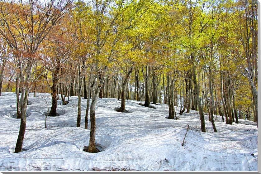 山形月山 風景写真パネル 72.7×50cmM20  【楽ギフ_名入れ】