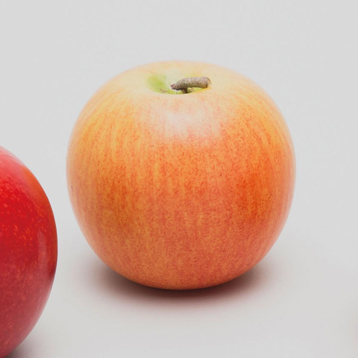 果物モデル りんご (ふじ) 12個セット 硬質スチロール製 【 デッサン スケッチ 絵画 モデル 果物 野菜 】