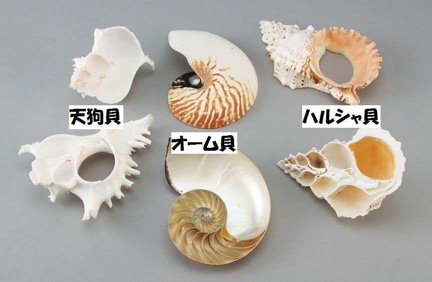 貝殻断面カットモデル 3点セット 【 デッサン スケッチ 絵画 モデル 貝殻 】
