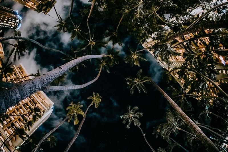 【日本製】アートパネル/ボード artmart アートマート 写真 アルミフレーム おしゃれ 綺麗 コーディネート 壁紙 額縁 ウォールステッカー フォト 小物 部屋 オフィス ホテル 旅館 病院 ホールのイメージアップ モノトーン 花 海 モノクロ 自然_木_I85_8517