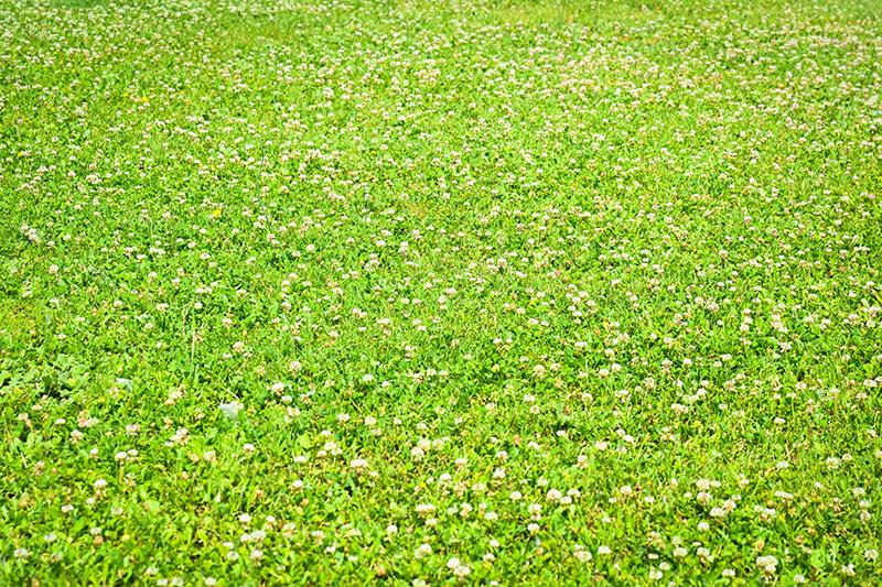 【日本製】アートパネル/ボード artmart アートマート 写真 アルミフレーム おしゃれ 綺麗 コーディネート 壁紙 額縁 ウォールステッカー フォト 小物 部屋 オフィス ホテル 旅館 病院 ホールのイメージアップ モノトーン 花 海 モノクロ 北欧 風景_イタリア_DSC_2632