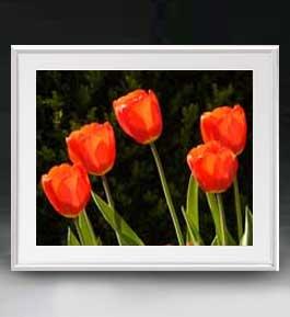 Flowers フラワーズ ♯026 アートフレーム サイズL 【油絵 直筆仕上げ】【油彩 布キャンバス 国内生産】 花の絵 静物画 641×531mm インテリアアート 送料無料