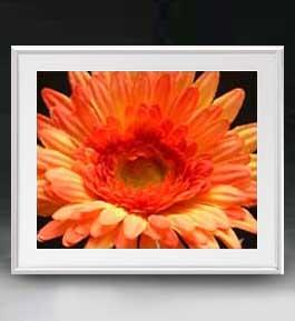 Flowers フラワーズ ♯030 アートフレーム サイズL 【油絵 直筆仕上げ】【油彩 布キャンバス 国内生産】 花の絵 静物画 641×531mm インテリアアート 送料無料