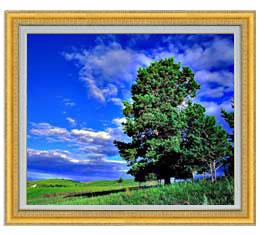 空と木と雲 F20サイズ 【油絵 直筆仕上げ】【額縁付】 油彩 風景画 オリジナルインテリア絵画 風水画 ゴールド額縁他各種 887×766mm 送料無料