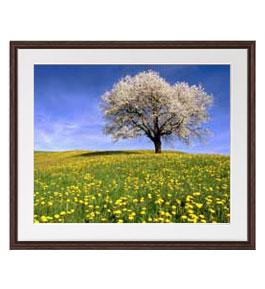 春-桜と菜の花- アートフレーム:色ブラウン サイズL 651×541mm 【油絵 直筆仕上げ絵画】【軽量フレーム・額表面保護板】 油彩 風景画 オリジナルインテリア絵画 風水画 壁掛け