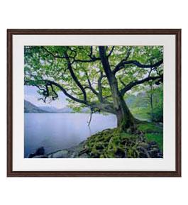 樹命 アートフレーム:色ブラウン サイズL 651×541mm 【油絵 直筆仕上げ絵画】【軽量フレーム・額表面保護板】 油彩 風景画 オリジナルインテリア絵画 風水画 壁掛け