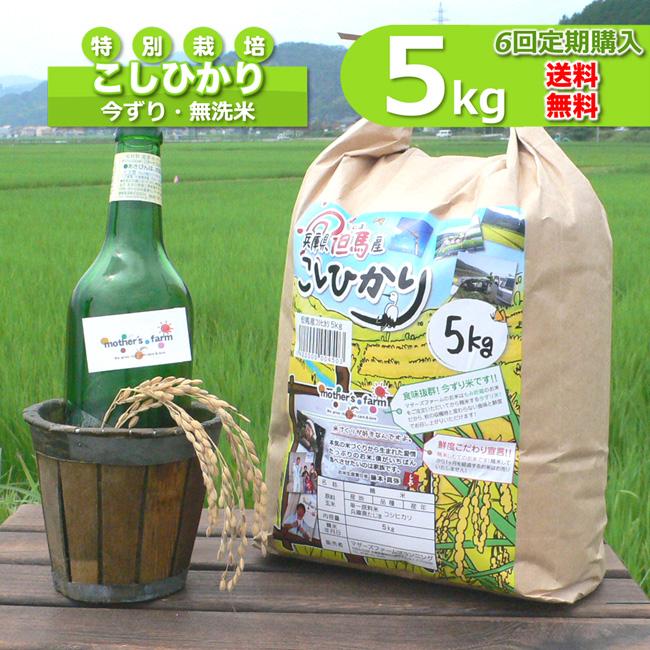 【定期購入】5kgx6回 令和元年産 玄米 白米 今ずり米 無洗米 減農薬・特別栽培米 コシヒカリ