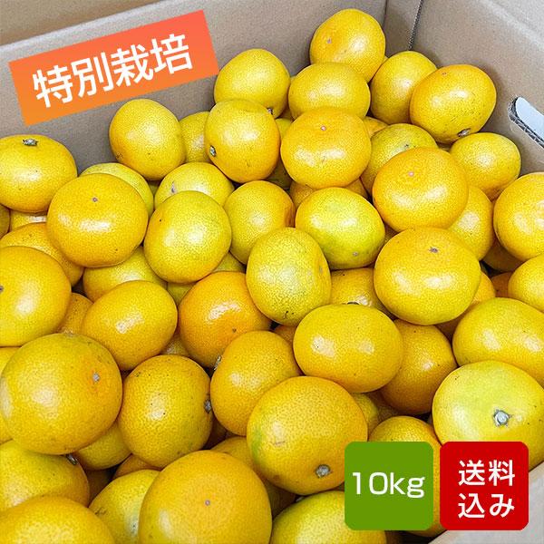 特別栽培 温州みかん 10kg 熊本県産 お歳暮 ギフト 送料無料