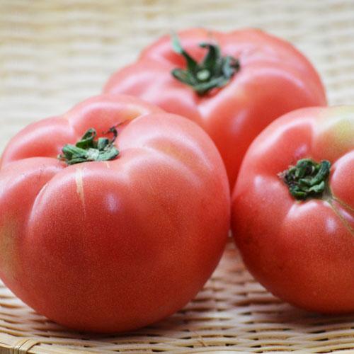 福岡産 トマト