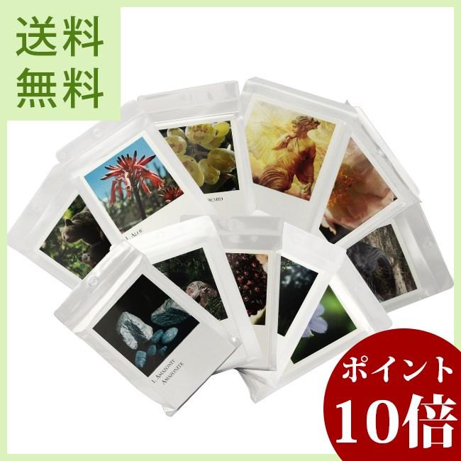 [コルテPHI写真カード全273枚]コルテPHIエッセンス/その他, 桜マークのようかん屋さん:47cbad23 --- jphupkens.be