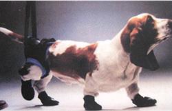 ケガや病気で自力歩行が難しい愛犬をサポート! 【送料無料】ウォークアバウトハーネス 後部 Lサイズ【介護用品】 アッシュ 服の上から 老犬 ハーネス 高齢犬 シニア