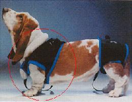 ウォークアバウトハーネス 前部 MLサイズ【介護用品】 アッシュ 服の上から 老犬 ハーネス 高齢犬 シニア