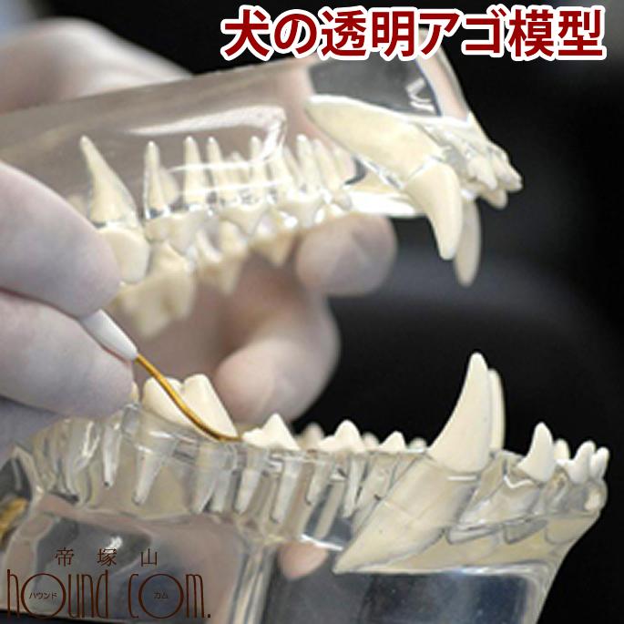 犬の透明アゴ模型 歯型 形 骨 顎 骨 勉強ペット用品 ペットグッズ 犬 用品 まとめ買い ボーン 犬のグッズ 帝塚山ハウンドカム
